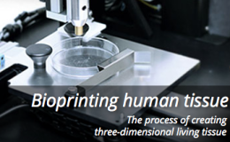 Yummy science: 3D-printing of human 'liver strips'